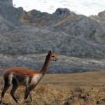 Impulsan turismo rural comunitario como estrategia en NorYauyos Cochas